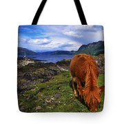Highland Cattle, Scotland Tote Bag