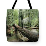 Hiker Moving Over A Fallen Redwood Tree Tote Bag