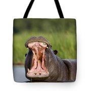 Hippopotamus Hippopotamus Amphibius Tote Bag