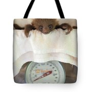 Hoffmanns Two-toed Sloth Orphan Tote Bag by Suzi Eszterhas
