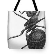 Hooke: Ant, 1665 Tote Bag
