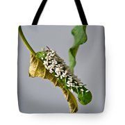 Hornworm With Braconid Wasp Parasites 2 Tote Bag