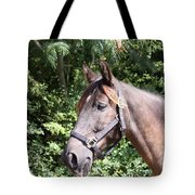 Horse At Mule Day In Benson Tote Bag