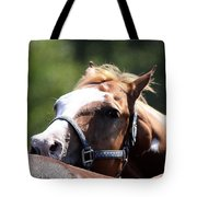 Horse At Mule Days 2012 - Benson Tote Bag
