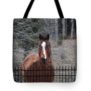 Horse Behind The Fence Tote Bag