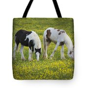 Horses Grazing, County Tyrone, Ireland Tote Bag