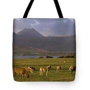 Horses Grazing, Macgillycuddys Reeks Tote Bag