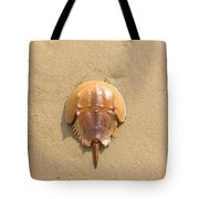 Horseshoe Crab In The Sand Campground Beach Cape Cod Eastham Ma Tote Bag
