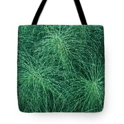 Horsetail Fern Tote Bag