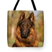 Hoss In Autumn Tote Bag