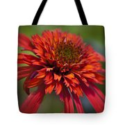 Hot Papaya Hybrid Coneflower Tote Bag