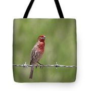 House Finch - Content Tote Bag