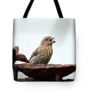 House Finch Eating Jelly Tote Bag