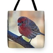 Housefinch IIi Tote Bag