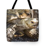 How Old Am I Tote Bag