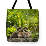 Huddled Goslings Baby Geese Along River's Edge Tote Bag