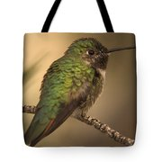 Humming Bird On Branch Tote Bag