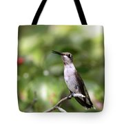 Hummingbird - Berries Tote Bag