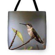 Hummingbird - Ruby-throated Hummingbird - Near The End Tote Bag