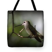 Hummingbird - Under The Canopy Tote Bag