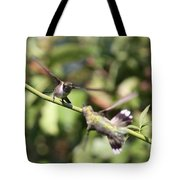 Hummingbird - You Have Done It Now Tote Bag