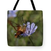 Hummingbird Or Clearwing Moth Din137 Tote Bag