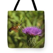 Hummingbird Or Clearwing Moth Din141 Tote Bag