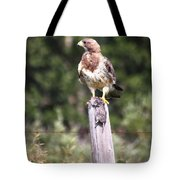 Hungry Hawk Tote Bag