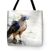 Hungry Red Teiled Hawk Tote Bag