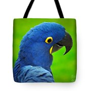 Hyacinth Macaw Tote Bag