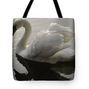 I Am Too Sexy For My Feathers Tote Bag
