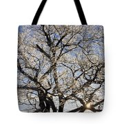 Ice Covered Tree At Sunrise Tote Bag