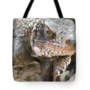 Iguana At Magens Bay Tote Bag
