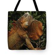 Iguana Costa Rica Tote Bag
