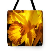 Illuminated Daffodil Photograph Tote Bag
