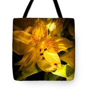 Illuminated Yellow Alstromeria Photograph Tote Bag