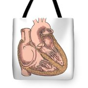 Illustration Of Heart Anatomy Tote Bag