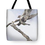 Immature Eagle At Play Tote Bag