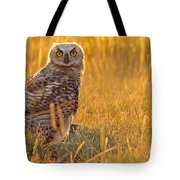 Immature Great Horned Owl Backlit Tote Bag