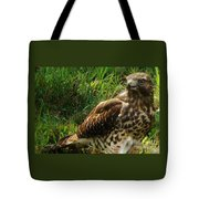 Immature Red Sholdered Hawk Tote Bag