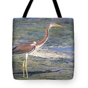 Immature Tricolored Heron Standing At High Tide Tote Bag