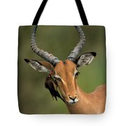 Impala Aepyceros Melampus Buck Africa Tote Bag