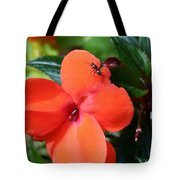 Impatient Ant Tote Bag
