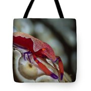 Imperator Commensal Shrimp On Eyed Sea Tote Bag