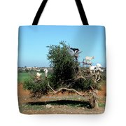 In Morocco Goats Grow On Trees Tote Bag