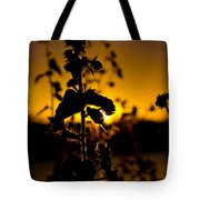 In Sunset's Glow Tote Bag