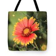 Indian Blanket Flower Tote Bag