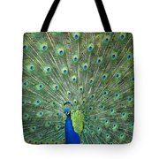 Indian Peafowl Pavo Cristatus Male Tote Bag