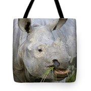 Indian Rhinoceros Grazing Kaziranga Tote Bag
