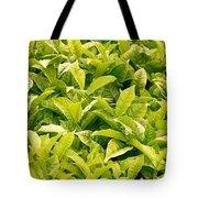 Indian Variety Of Tea Tote Bag